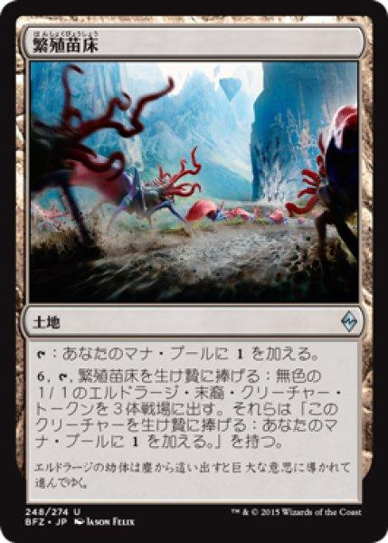 画像1: 『FOIL』繁殖苗床 (1)